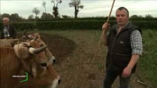 Labours à l'ancienne (Vendée)