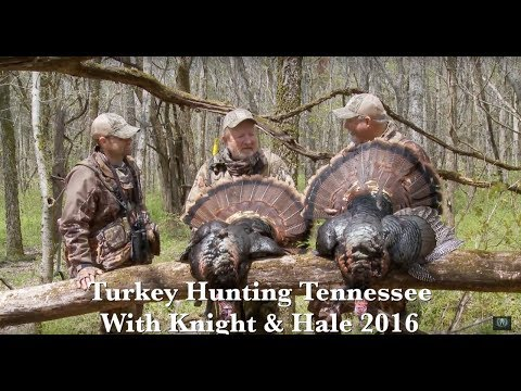 Turkey Hunting Tennessee With Knight & Hale