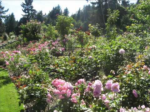 Rose Garden, Washington Park, Portland, Oregon 2010 - YouTube