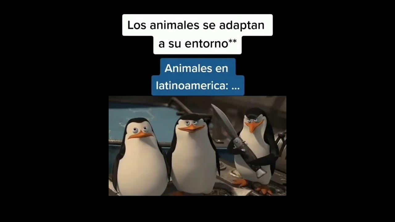 Los animales se adaptan a su entorno.Animales en Latinoamérica