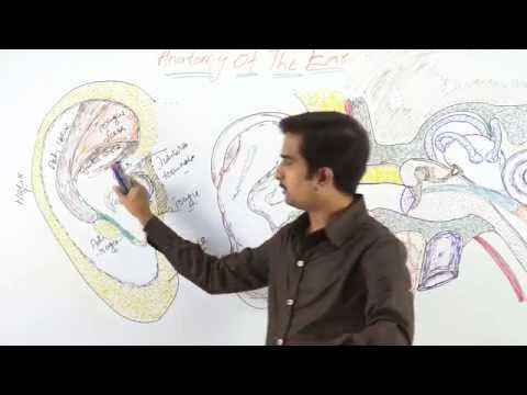 ANATOMY OF EXTERNAL EAR - Dr.G.Bhanu Prakash