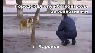 Городская служба контроля за животными города Харьков