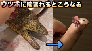 ウツボに噛まれるとこんな感じに指がエグれます thumbnail