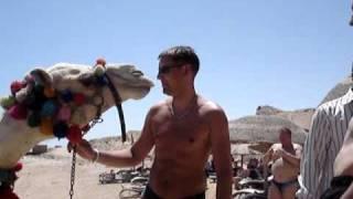 египет с верблюдом.MPG