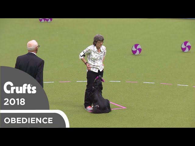 Obedience - Bitch Championship - Part 1 | Crufts 2018