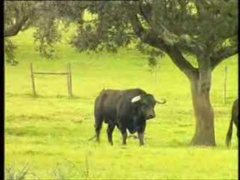 El Toro Bravo En El Campo 2 Youtube
