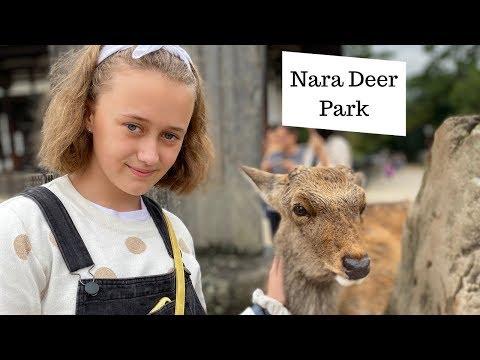 Nara Japan - Deer Park, Temples, Hotel By Station