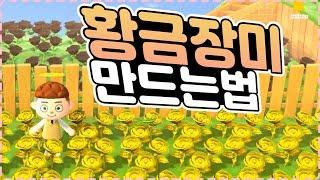 모동숲 황금장미 만드는법 간단꿀팁 【동물의숲, 모여봐요…