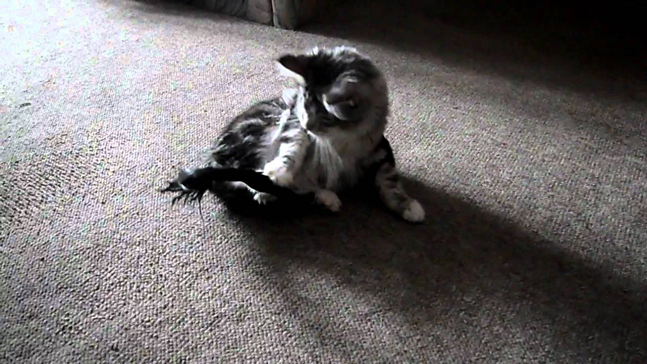 Мокрый хвост кот