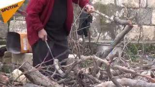 بالفيديو...هكذا يقضي الفلاحون في ريف اللاذقية خريفهم الدافئ