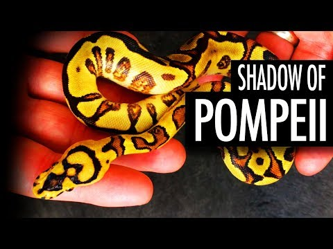 New MAGMA Combos!  Amazing African Import!  A Redstripe Clown Project Morphs 101  Justin Kobylka