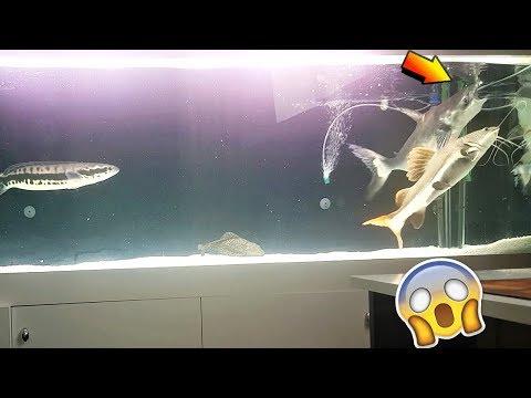 KÖPEK BALIĞINI 10 GÜN AÇ BIRAKIRSAK NOLUR ( IŞIKLARI PATLATTI ) !!! - Canavar Balıklar