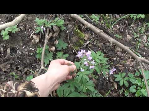 Съедобные растения в конце марта