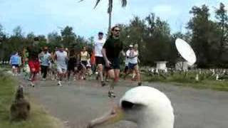 Start of the 2008 MIdway Atoll-Sand Island 5K Race