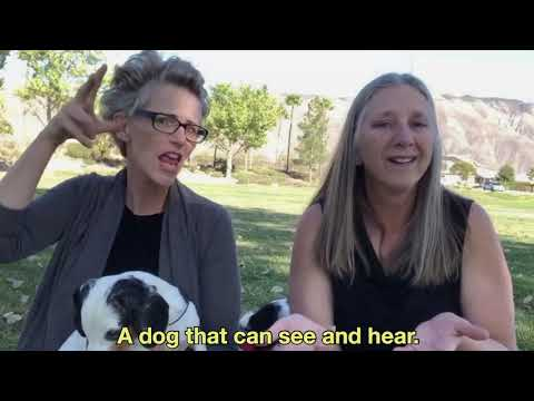 Seek The World: ProTactile - Communicate With DeafBlind Dogs