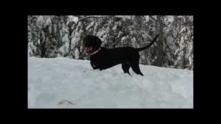 Hd Our New Black Lab/hound Rescue Puppy 'rj' Going Crazy Playing In The Winter 2012