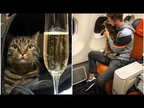 شاهد: مسافر يهرب قطه -البدين- داخل طائرة روسية وشركة الطيران تعاقبه…  - نشر قبل 2 ساعة