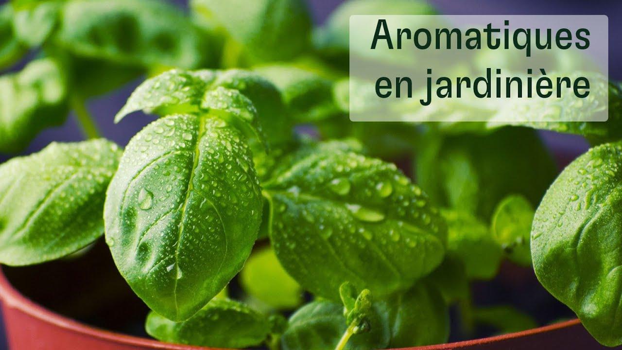 Plantes Aromatiques En Jardinière aromatiques en jardinière