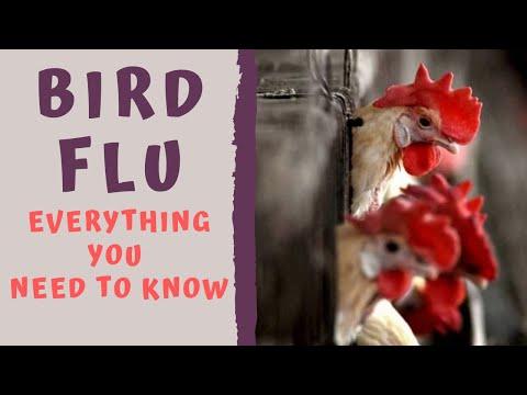 BIRD FLU EPIDEMIC 2021 - Everything you need to Know about Bird Flu/Avian Influenza