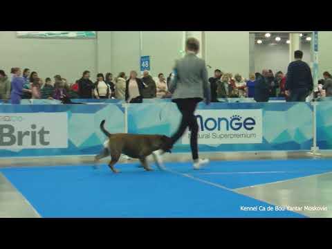 Eurasia 2019 Ca de Bou Females Champion