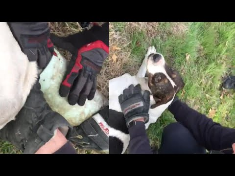 Firefighters Rescue Dog With Sewer Pipe Stuck on Its Head