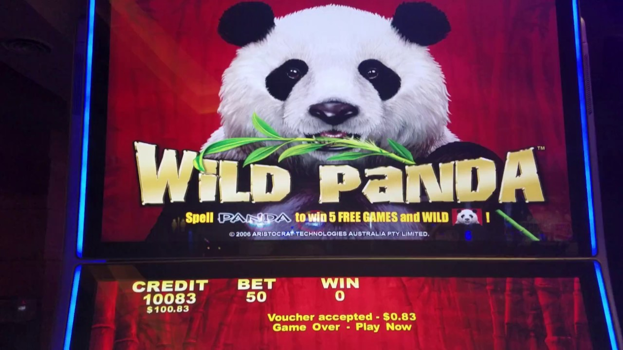Wild Panda Slot Machine Bonus Big Win !
