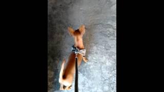 Vlog diário com o Lipi-Por:Yasmin, Anny, e Lipi!