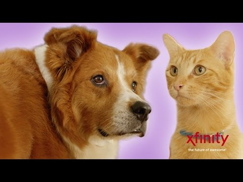 Things Your Pets Do When You're Not Home // Presented by BuzzFeed & XFINITY