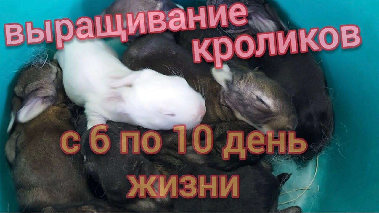 Кролики. Крольчата от Флендера. Первый месяц жизни крольчат, снимаю каждый день. Один открыл глазки.