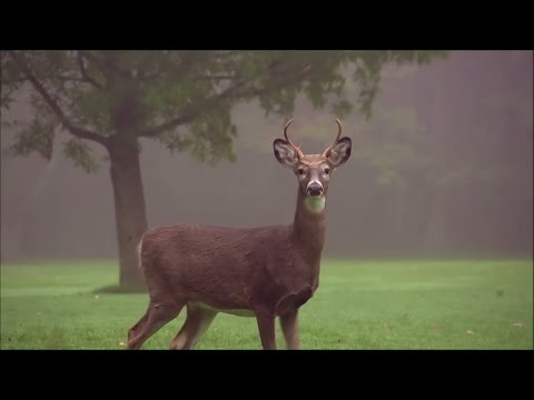 Neofolk Dark Folk Music - NEMUER - Under the Tree of Memories