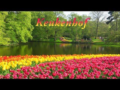 Keukenhof 2018 - The Most Beautiful Spring Garden In The World | Vườn Hoa Keukenhof – Hà Lan