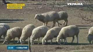 На Донеччині зграї голодних хижаків нападають на села