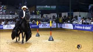 Dulce Seduccion De la Ilusion y  Amanecer de la Peninsula Gran Campeona Paso Fino Copa America Equin thumbnail