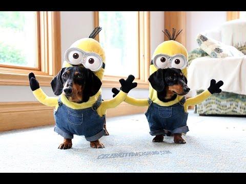 Wiener Dog Minions!