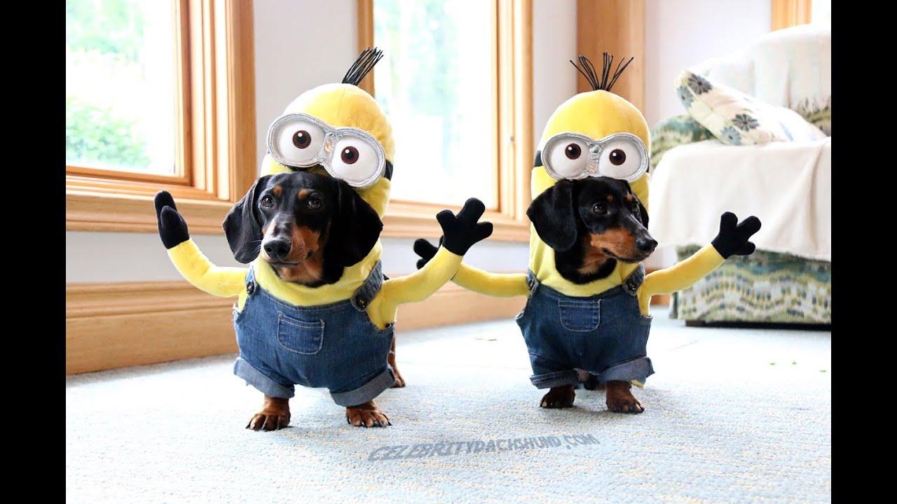 Wiener Dog Minions! - YouTube
