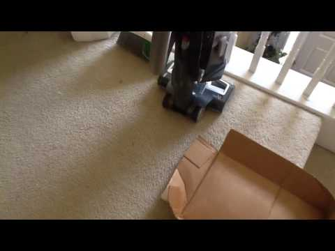 Cat slides down on stairs with card board lid