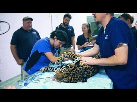 AZA Zoos & Aquariums - SANTA BARBARA ZOO - YouTube