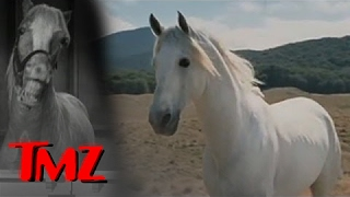 Lord Of The Rings' Horse Fighting Orcs In Heaven | TMZ
