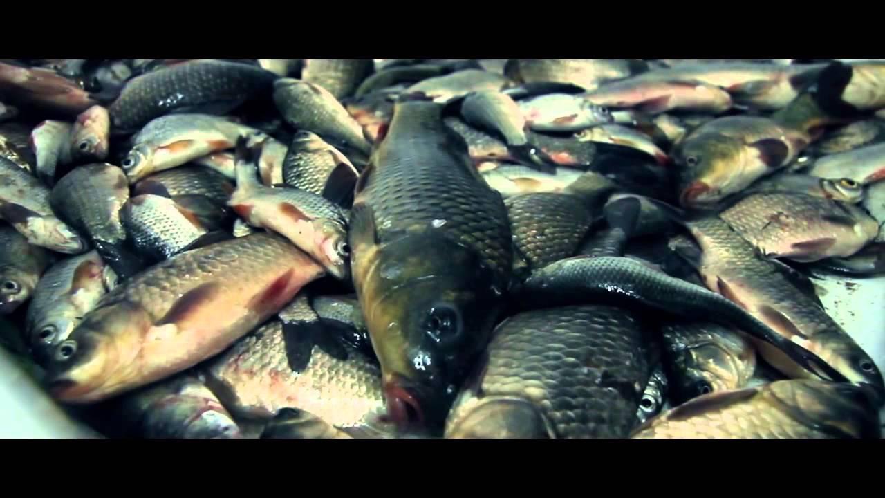 Рыбалка на Волге '13 - дело не в количестве (Fishing on Russian river Volga 2013)