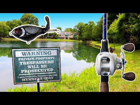 BIG Bass Love MINI WHOPPER PLOPPERS!!! | Whopper Plopper Bass Fishing BLOWUPS!