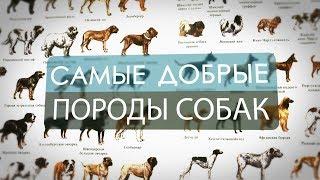 Самые добрые породы собак в мире ( ТОП 10 )
