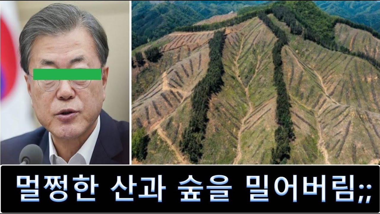 환경파괴, 멀쩡한 산을 민둥산으로 만드는 문 정부 나무 다 뽑는다
