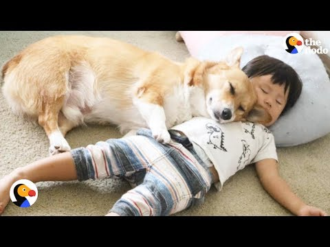 Corgi Dog, Boy Best Friends Grow Up Together | The Dodo