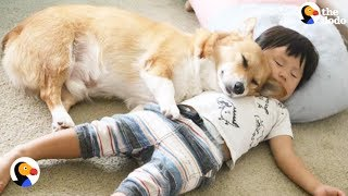 Corgi, Baby Boy Best Friends Grow Up Together | The Dodo
