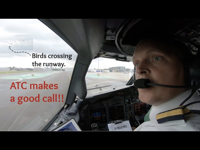 ATC makes a good call concerning possible bird strike on Rotterdam The Hague Airport (RTM EHRD).