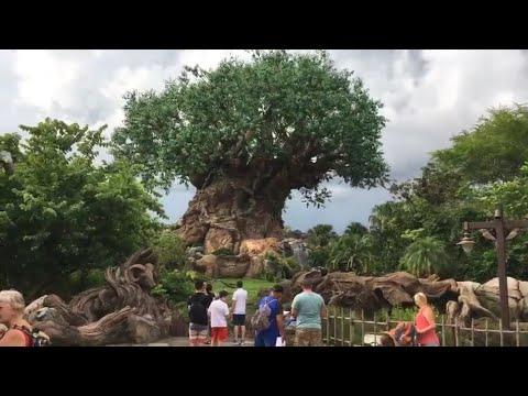 Disney's Animal Kingdom Live Stream - 7-14-17 - Walt Disney World