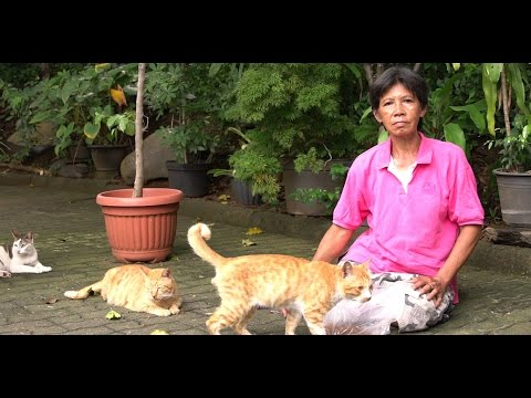 Jobless woman in South Jakarta helps cats despite limitation