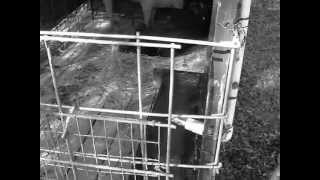 Diy Easy Animal Pen For Pigs, Chickens, Goats, Dogs, Etc.  Cheap!