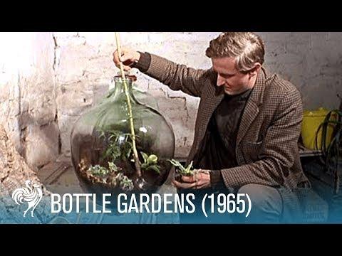 Bottle Gardens 1965