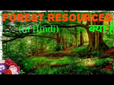 Forest Resources l ( in hindi )